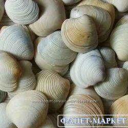 Ракушки морские для декора и рукоделия