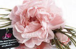 Цветы из ткани брошь Нежный Пион