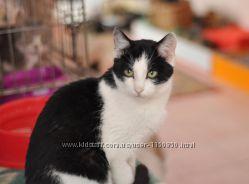 Черно-белое чудо  котик Тарзан в добрые ручки