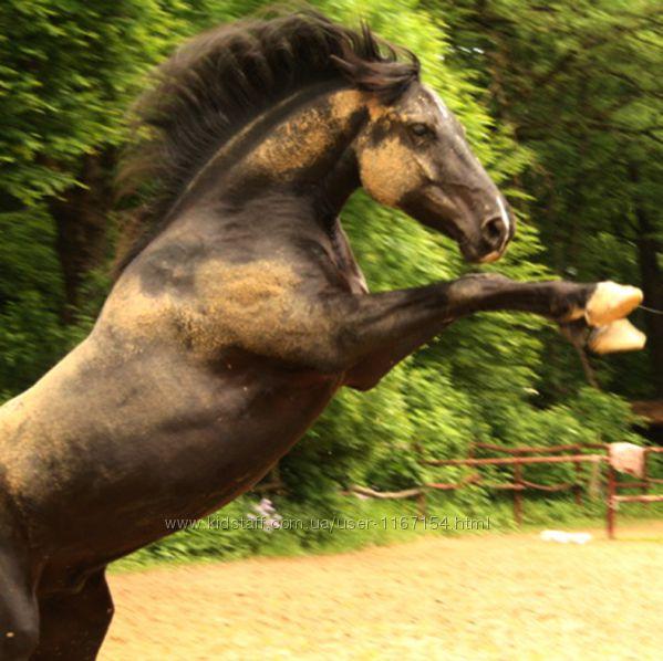 Электропастух для лошадей полный комплект