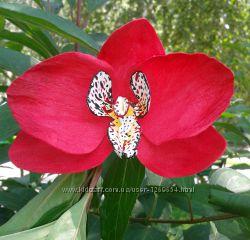 Украшение. Цветы орхидей. Фоамиран
