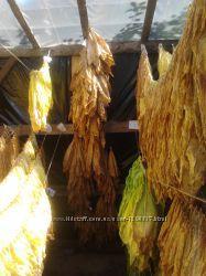 Семена табака - 100 сортов. Насіння тютюну