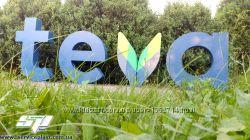 Наружная объемная реклама, вывеска, логотип на деревянной подложке эко-выв